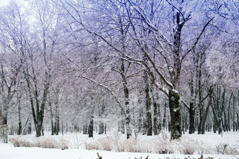 Floresta nevado no inverno fotografia de stock