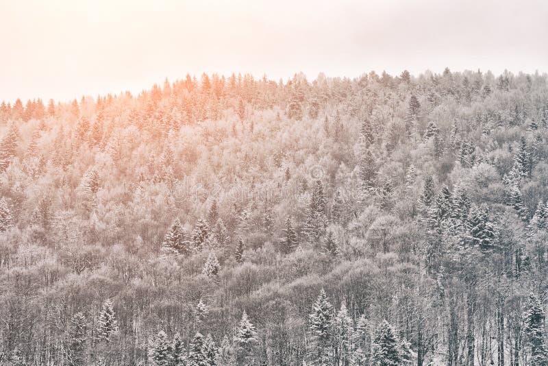 Floresta nevado no monte Dia ensolarado Paisagem do inverno fotografia de stock