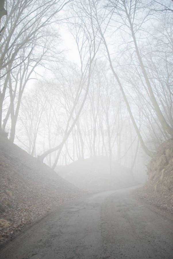 Floresta nevoenta foto de stock