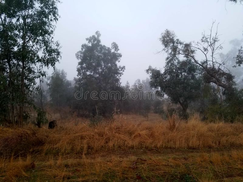 Floresta nevoenta imagens de stock royalty free
