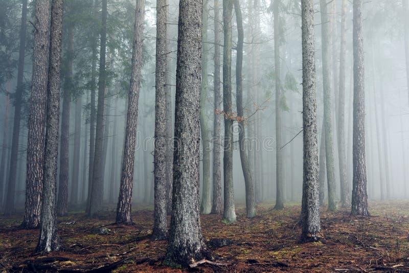 Floresta nevoenta do outono fotos de stock royalty free