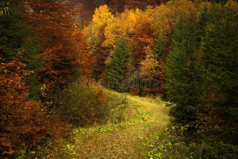 Floresta nevoenta durante o outono fotografia de stock
