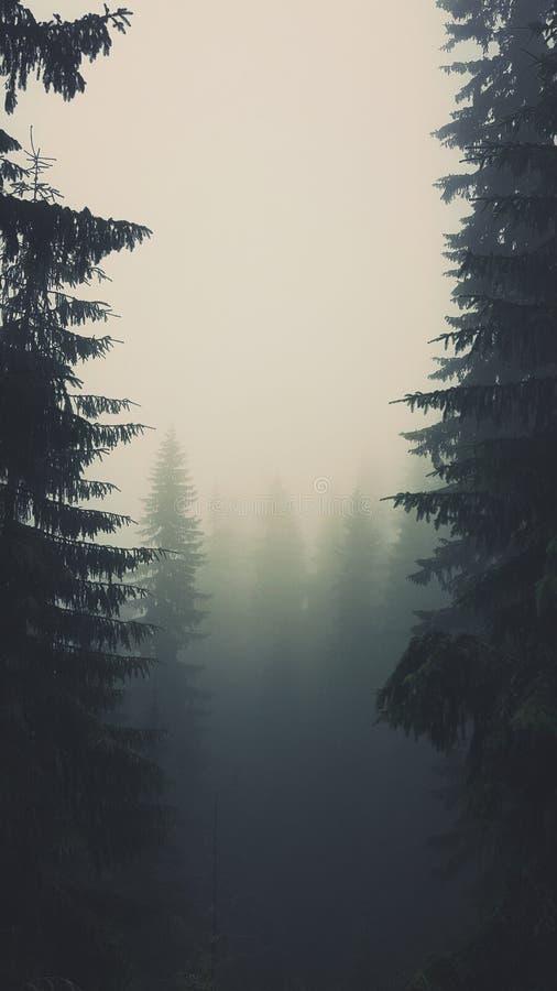 Floresta nevoenta em montanhas Tetra fotos de stock royalty free