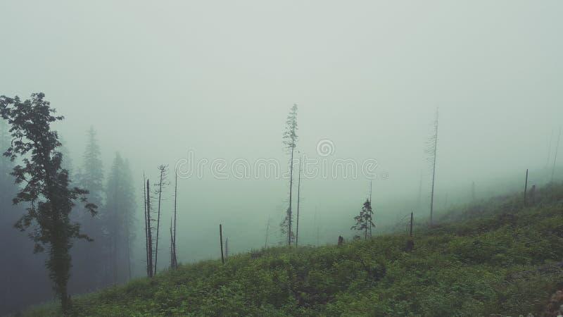 Floresta nevoenta em montanhas Tetra foto de stock
