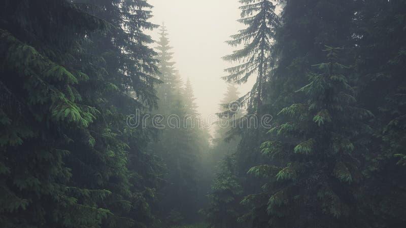 Floresta nevoenta em montanhas Tetra imagem de stock royalty free