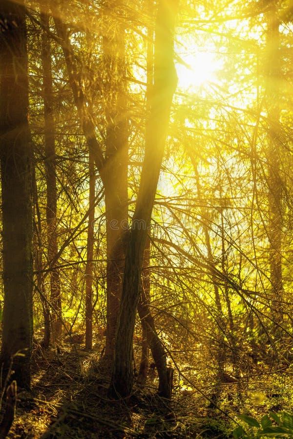 Floresta nevoenta fantástica com uma estrada quebrada na luz solar Sun B imagens de stock