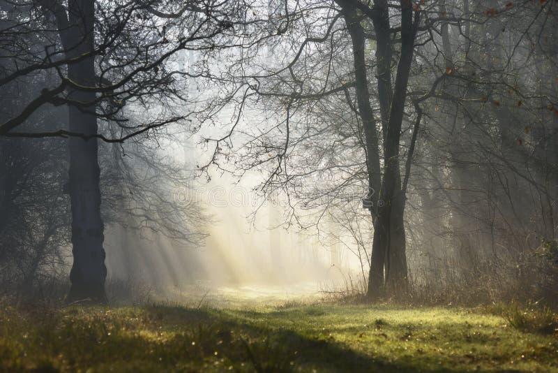 Floresta nevoenta místico mágica com raios de sol na manhã imagem de stock royalty free