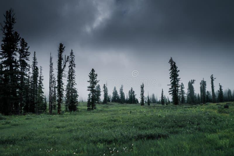 Floresta nevoenta na manh? foto de stock