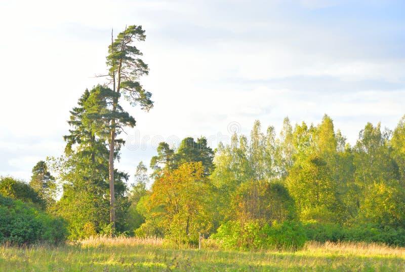 Floresta nivelando fotos de stock