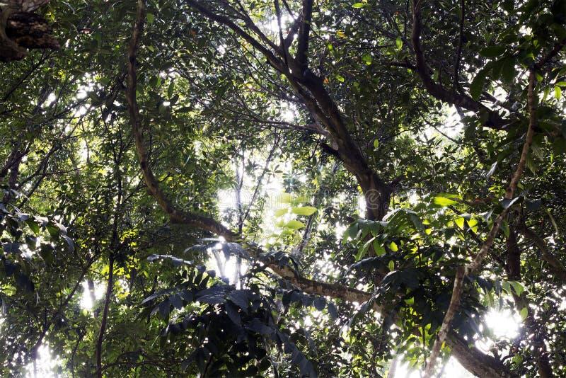 Floresta no céu da vista imagens de stock
