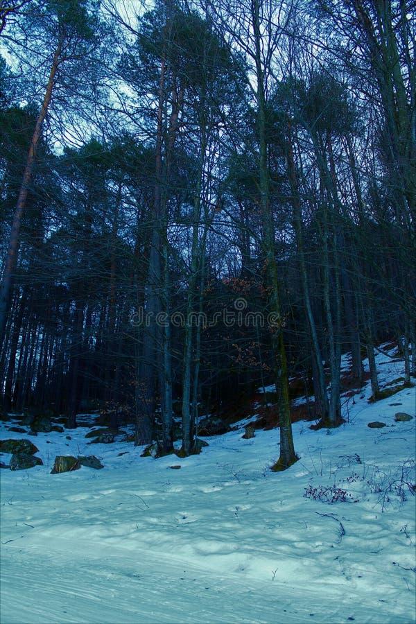 Floresta no inverno fotografia de stock royalty free