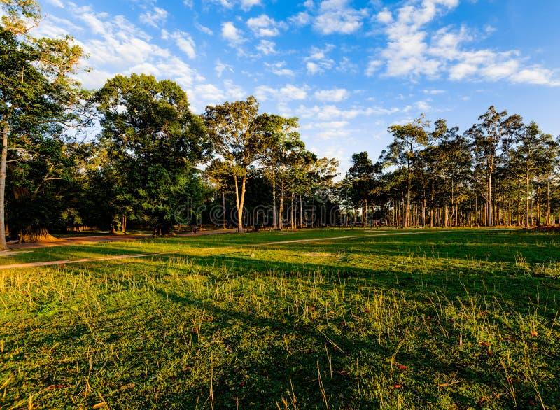 Floresta no nascer do sol imagens de stock royalty free