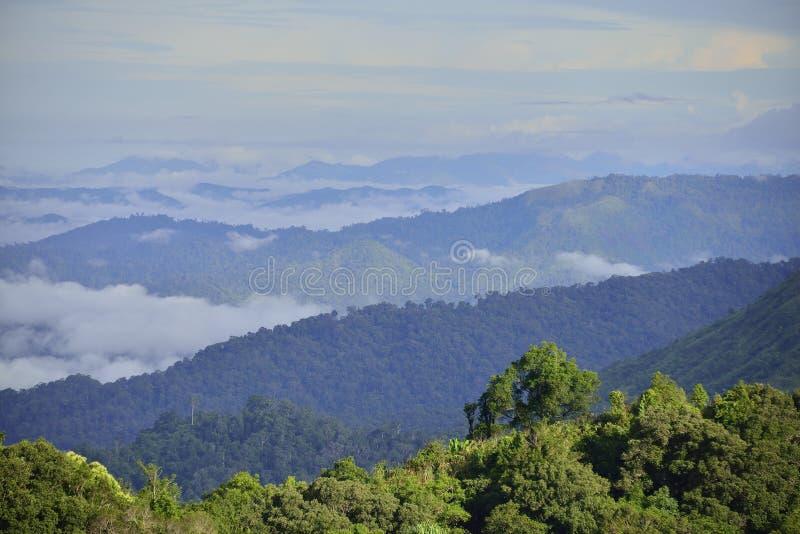 Floresta no oeste de Tailândia imagem de stock royalty free