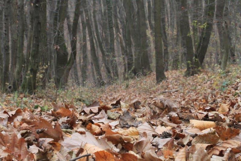 Download Floresta no outono foto de stock. Imagem de vento, tempo - 16867034