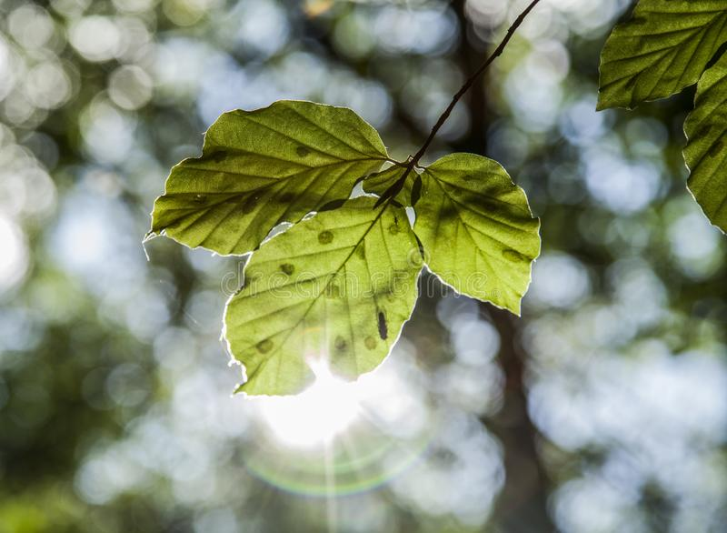 Floresta no outono - folha ensolarado imagem de stock royalty free