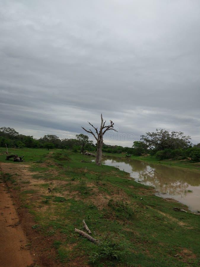 Floresta no parque nacional do yala fotografia de stock royalty free