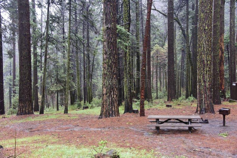 Floresta no vale de Yosemite imagem de stock
