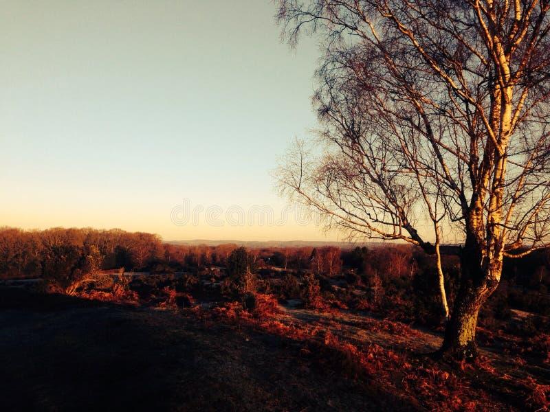 Floresta nova do crepúsculo imagem de stock royalty free