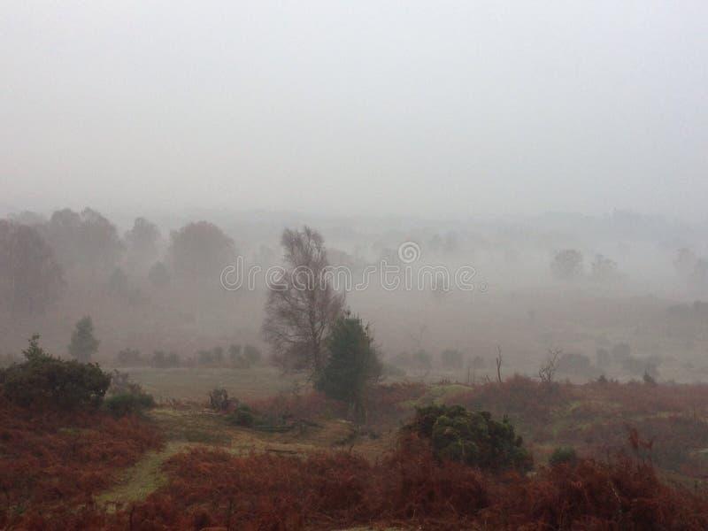 Floresta nova nevoenta fotografia de stock