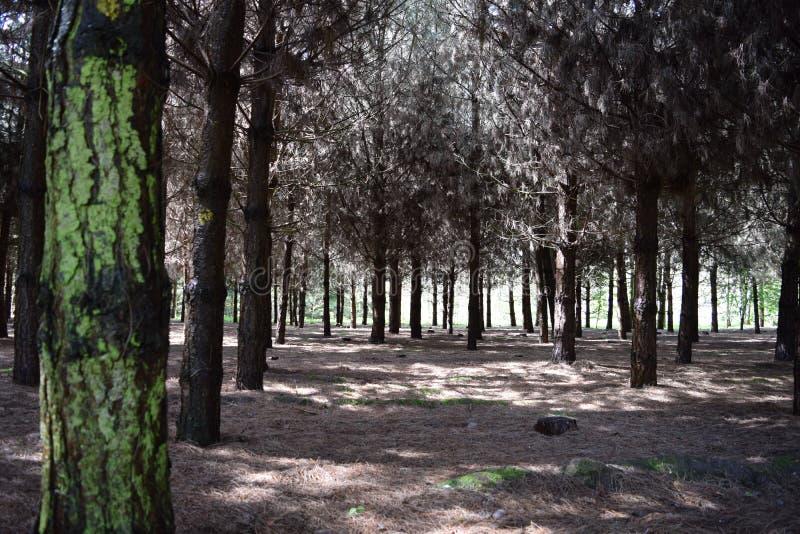 Floresta obscuro em um dia ensolarado foto de stock