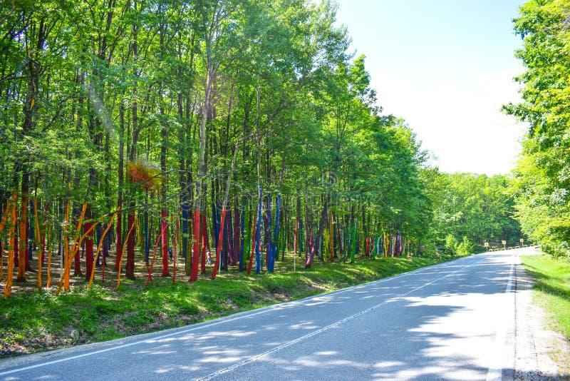 A floresta ou o Padurea colorido Colorata de Poienari Romênia Troncos de árvore de surpresa pintados em muitas cores diferentes N imagens de stock royalty free