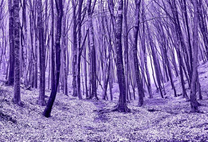 Floresta outonal