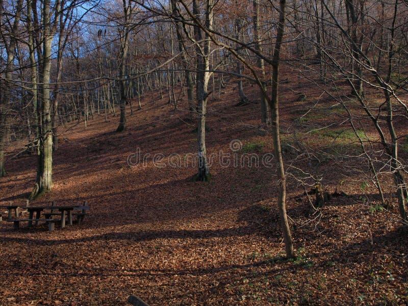 Floresta outonal 2 fotografia de stock