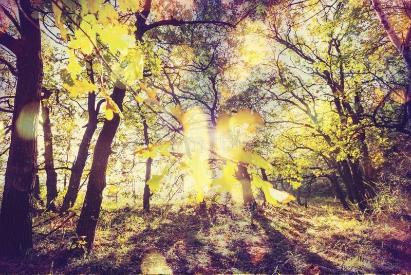 Floresta outonal imagens de stock royalty free