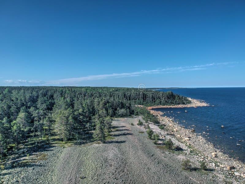 Floresta pelo mar fotografia de stock