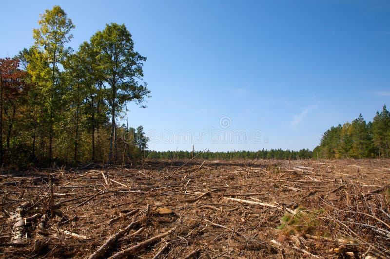 Floresta pequena bem defenida fotografia de stock royalty free