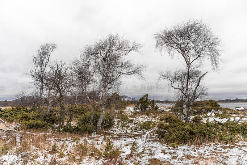 Floresta pequena do zimbro imagem de stock