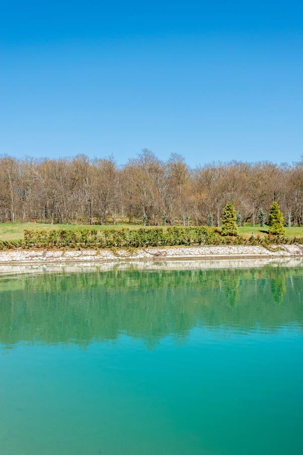 Floresta perto da lagoa de água agradável fotos de stock