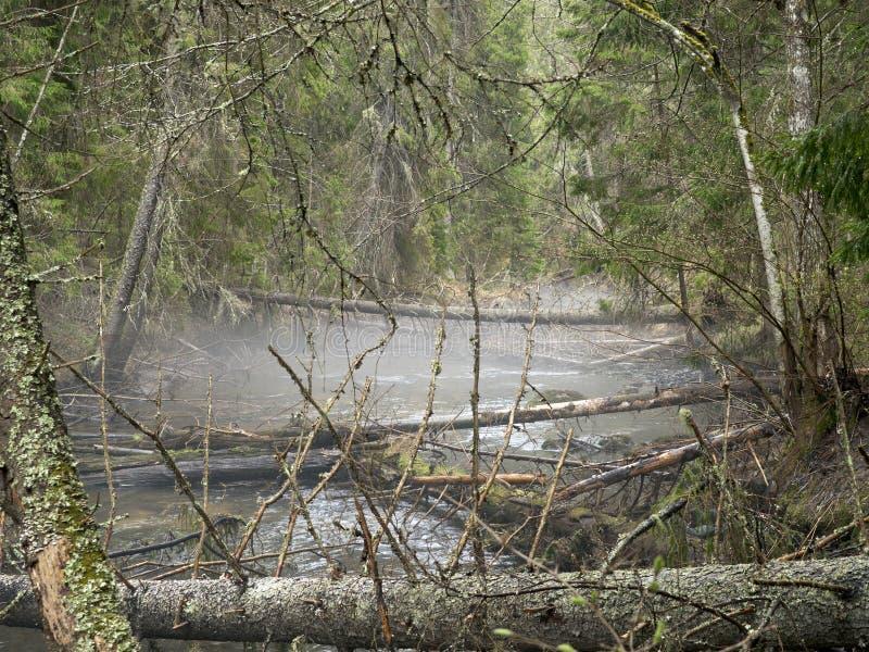 Floresta Profunda Imagens de Stock