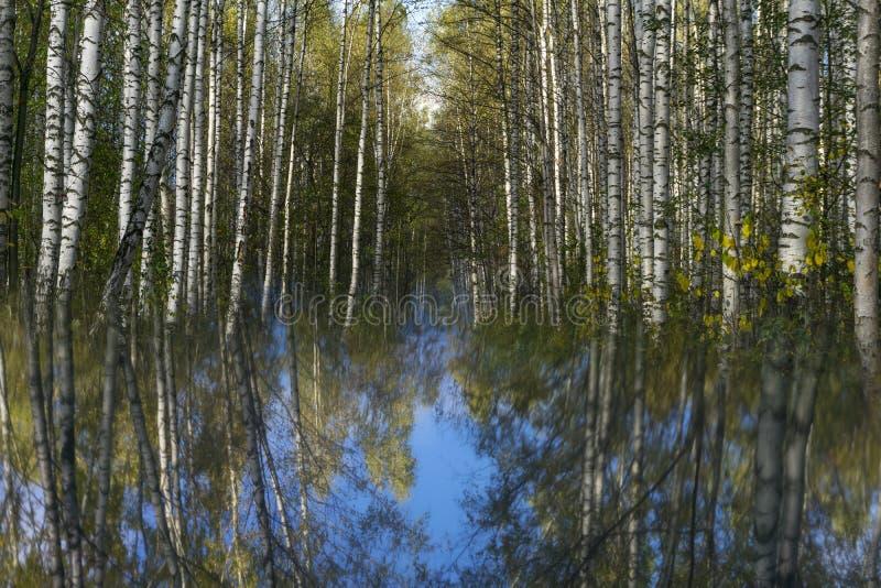 Floresta que afunda-se no céu fotos de stock royalty free