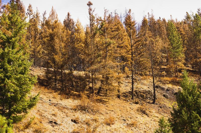 Floresta queimada incêndio florestal fotografia de stock