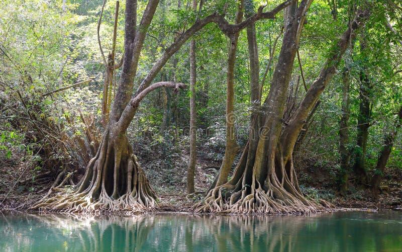 Floresta ribeirinho fotografia de stock royalty free