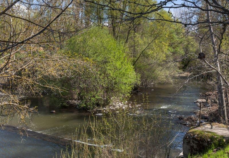 Floresta ribeirinho ao lado do rio Manzanares foto de stock