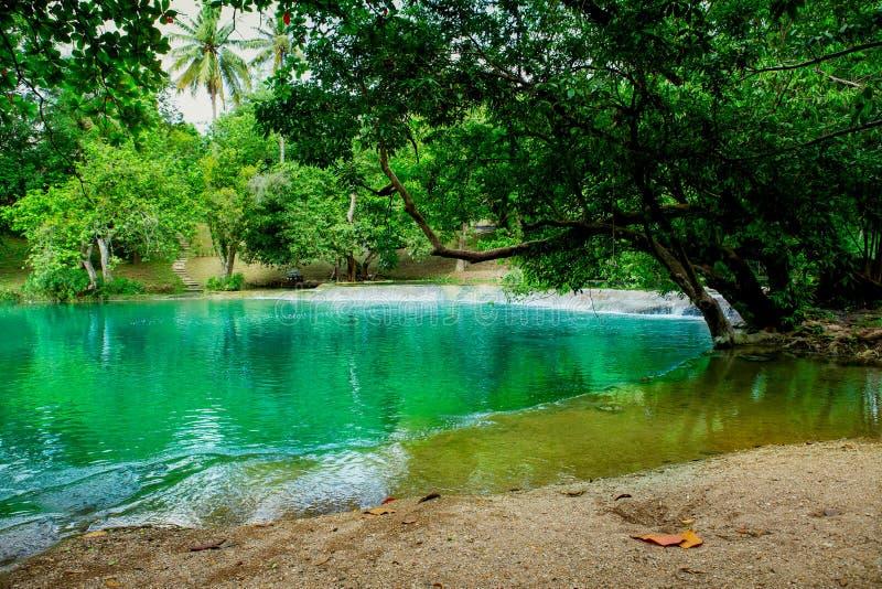Floresta, rocha - objeto, mola - água de fluxo, primavera, suporte imagem de stock royalty free