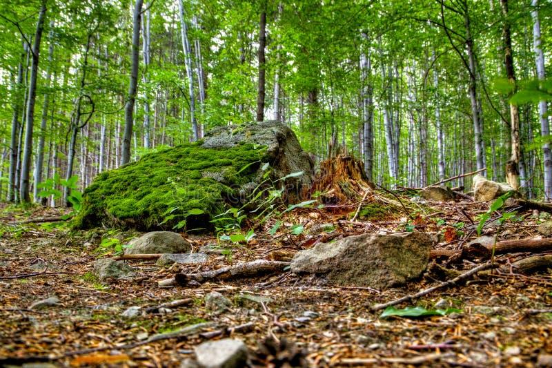 Floresta selvagem imagem de stock