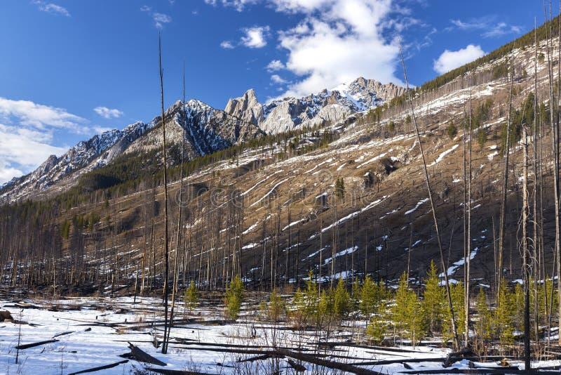 Floresta Selvagem Velha Prescrita Burn Mountain Slope Banff Parque Nacional Paisagem de Rockies Canadenses imagens de stock