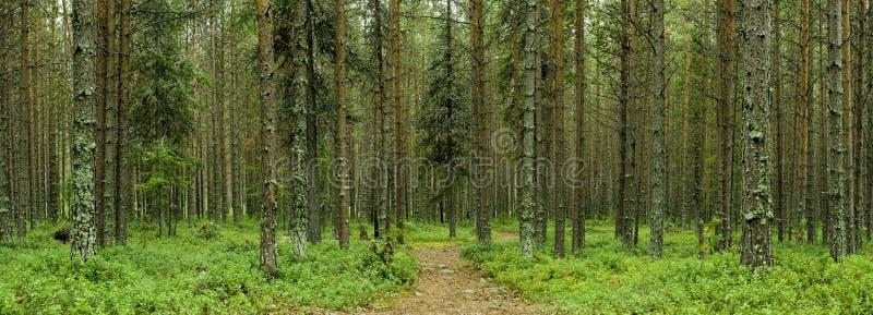 Floresta silenciosa imagem de stock royalty free
