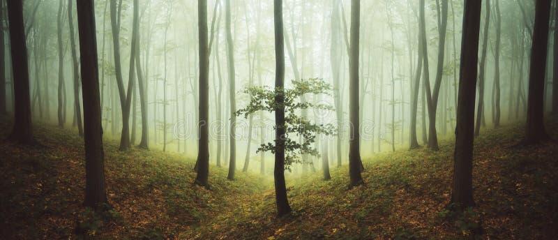 Floresta simétrica surreal com névoa imagem de stock