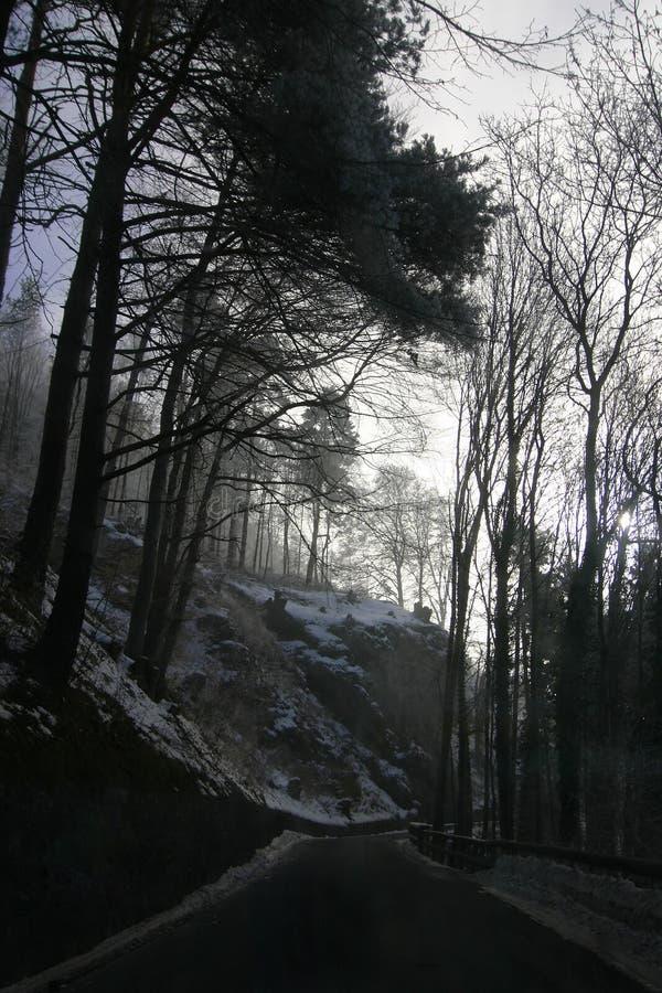 Floresta sombrio imagem de stock