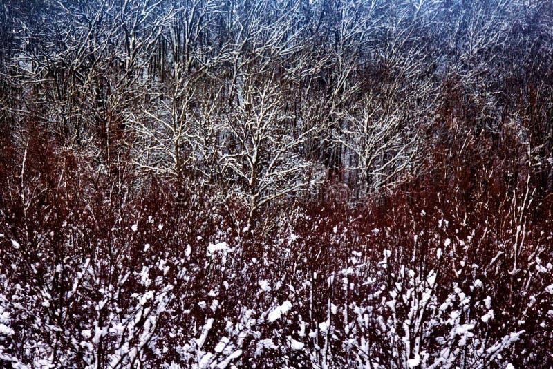 Floresta sombrio no outono atrasado imagens de stock