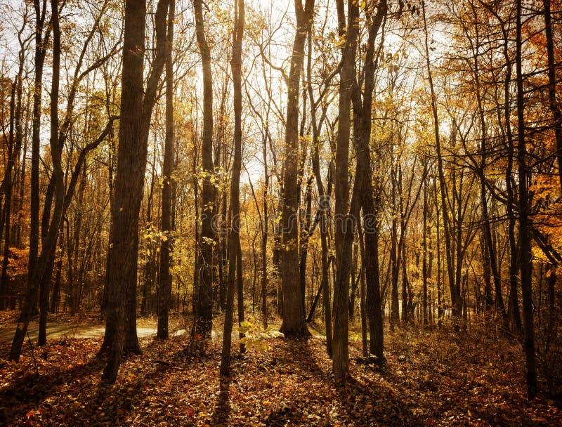 Floresta Sunlit foto de stock royalty free
