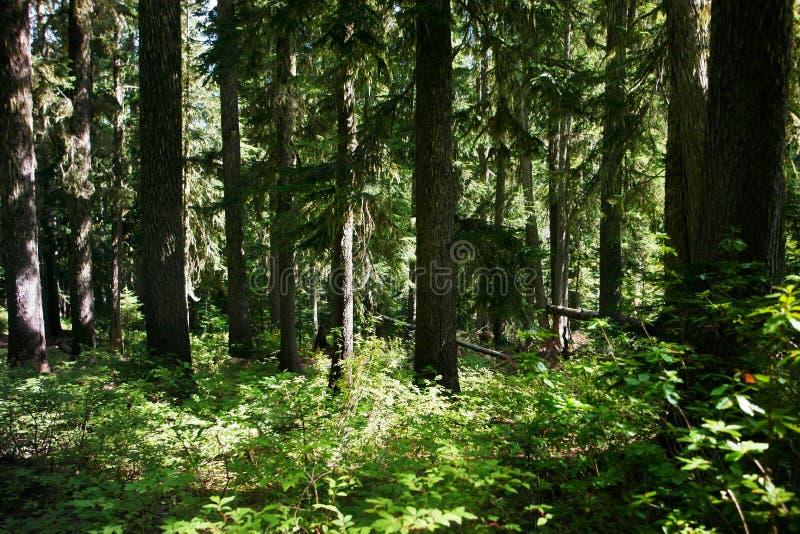 Floresta Sunlit imagens de stock