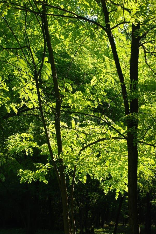 Floresta Sunlit fotos de stock