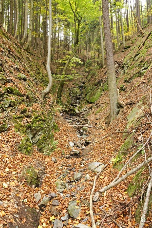 Floresta Sunlit do outono fotografia de stock royalty free