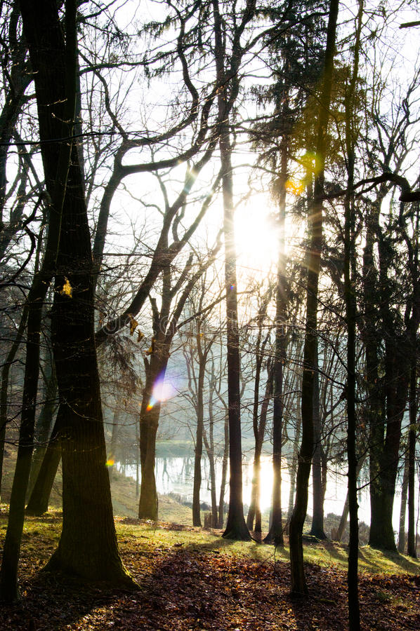 A floresta sunshining imagens de stock royalty free