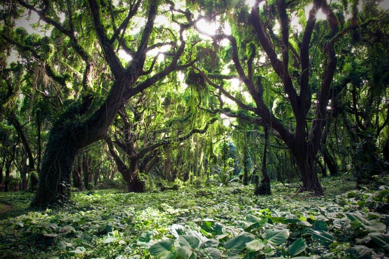 Floresta tropical imagens de stock